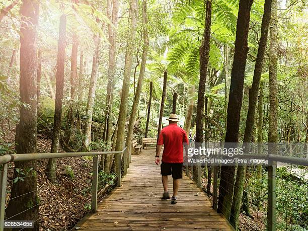 Australia, New South Wales, Katoomba, Man walking in forest