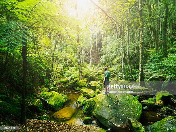 australia, new south wales, katoomba, mid adult man standing on rock in green forest - katoomba stock pictures, royalty-free photos & images
