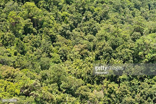 Australia, New South Wales, Mullumbimby, rainforest canopy of Nightcap National Park