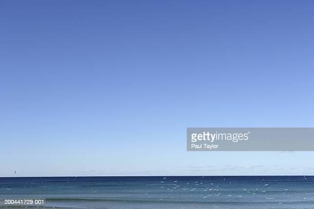 australia, new south wales, sydney, manly beach - manly wilder stock-fotos und bilder