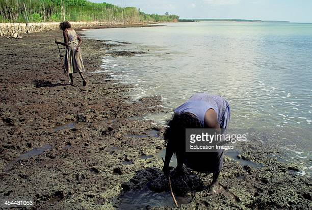 Australia Northern Territory Bathurt Island One Of Two Tiwi Aboriginal Islands Tiwi Women Looking For Mud Crabs