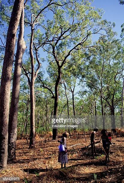 Australia Northern Territory Bathurt Island One Of Two Tiwi Aboriginal Islands Tiwi Possum Hunt