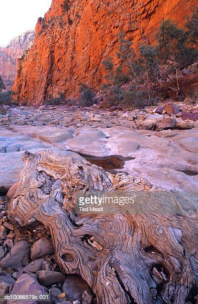 australia, northern territory, western macdonnell ranges national park, ormiston gorge, water worn tree buttress - flying buttress stock photos and pictures