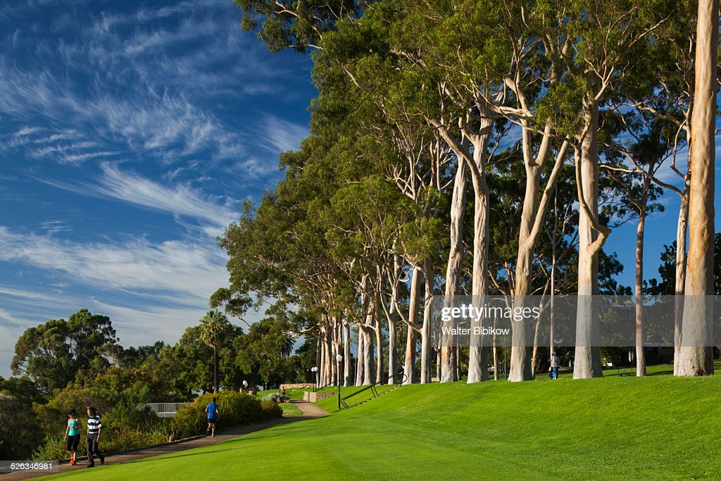 Australia Perth Kings Park Exterior Stock Photo - Getty Images
