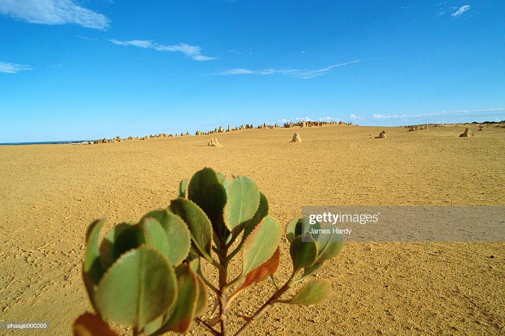 Australia, Pinnacles Desert : Stockfoto
