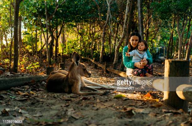 australia, queensland, mackay, cape hillsborough national park, mother and little daughter watching kangaroo - tourism stock pictures, royalty-free photos & images