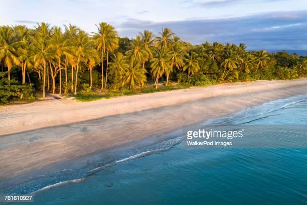 Australia, Queensland, Palm trees on coastline