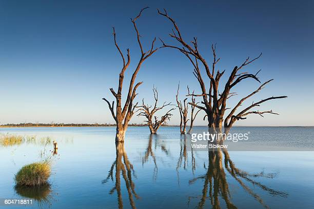 australia, south australia, exterior - petrified log stock pictures, royalty-free photos & images