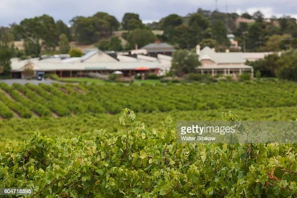 australia, south australia, exterior - barossa valley stock pictures, royalty-free photos & images