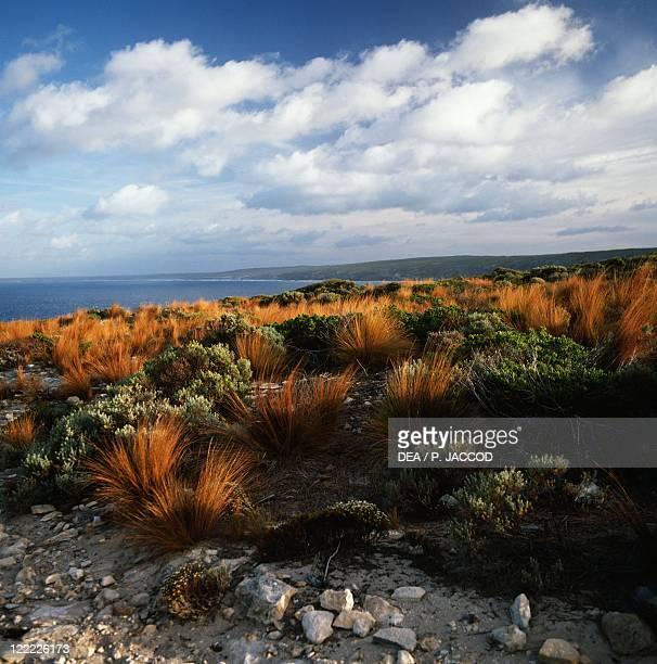 Australia South Australia Kangaroo Island Vegetation