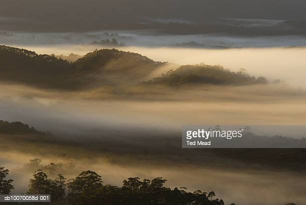 Australia, Tasmania, Southwest National Park, Arthur Plains in mist