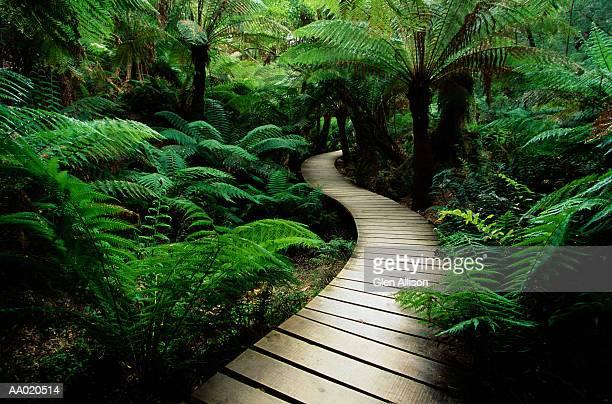 Australia, Victoria, Mait's Rest Rainforest walk