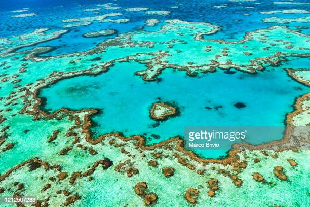 australia. whitsundays. great barrier reef. heart reef. aerial view - marco brivio stock pictures, royalty-free photos & images