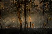 Australian Bush Fires - Loan Firefighter Observes Damage