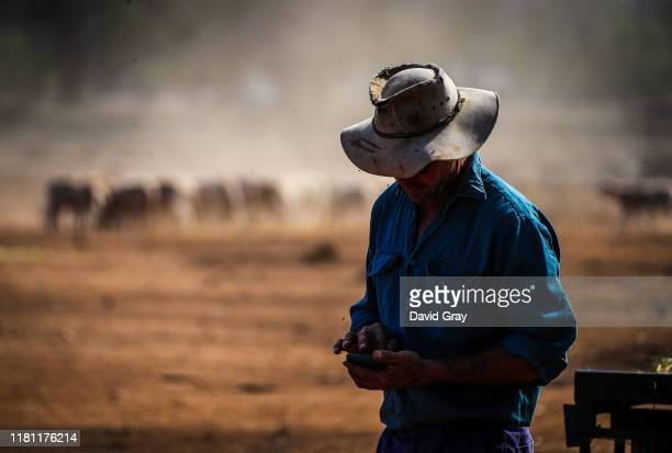 Australian farmer Richard Gillham checks his phone for weather updates after feeding his sheep in a drought-affected paddock on his property...