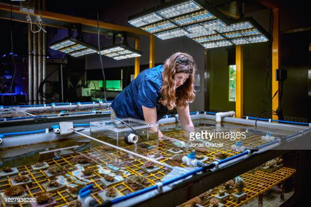 Australian Institute of Marine Science, researcher Samantha Jaworski among tanks of water of various temperatures where corals bred and are...