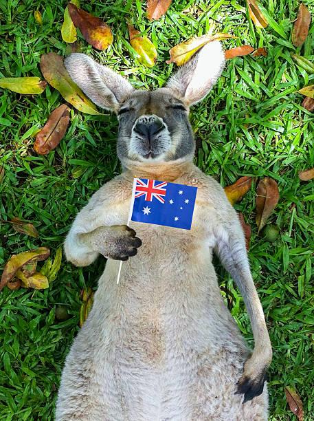Australian Kangaroo Wall Art