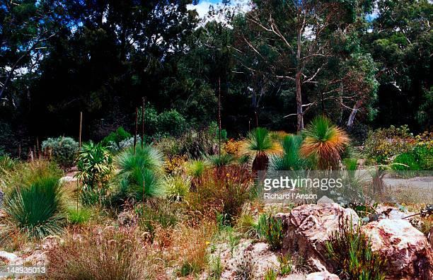 Australian National Botanic Gardens.
