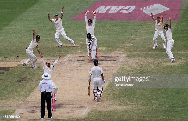 Australian players celebrate after taking the wicket of Wriddhiman Saha of India during day five of the Fourth Test match between Australia and India...