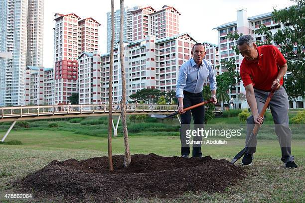 Australian Prime Minister Tony Abbott and Singapore Prime Minister Lee Hsien Loong plant a tree at Bishan Park on June 28 2015 in Singapore...