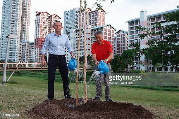 Australian Prime Minister Tony Abbott and Singapore Prime Minister Lee Hsien Loong water a tree at Bishan Park on June 28 2015 in Singapore...