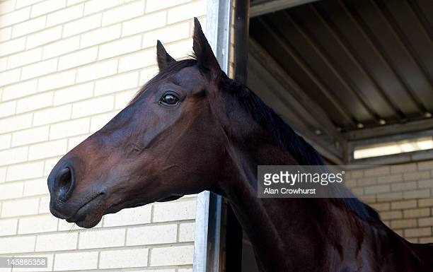 Australian racehorse Black Caviar arrives at Heathrow airport prior to racing at the Royal Ascot meeting on June 07 2012 in London England