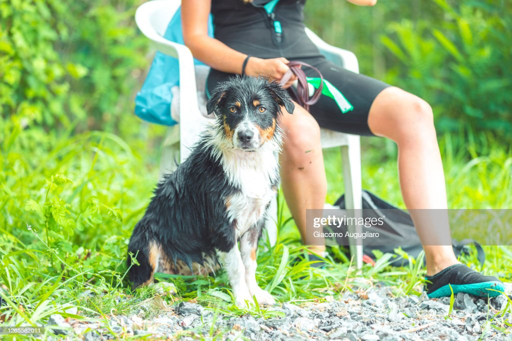Australian Shepherd Puppy And Its Owner At Their First Water Training Lombardy Italy High Res Stock Photo Getty Images