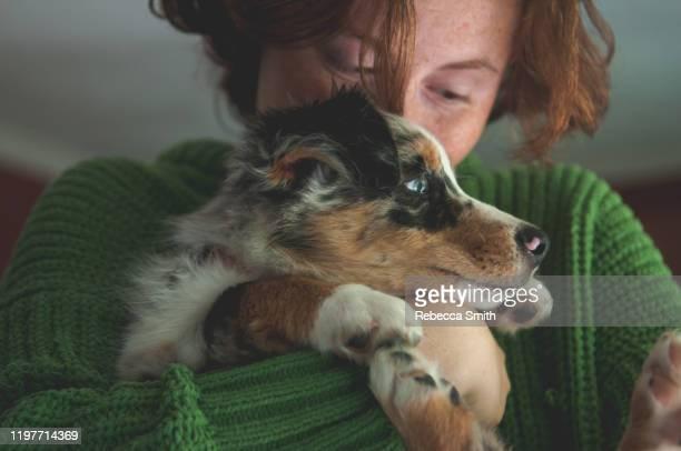 australian shepherd puppy with child. - australische herder stockfoto's en -beelden