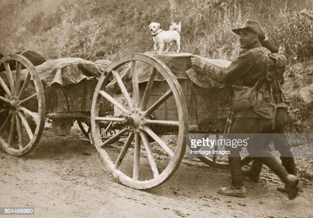 Australian troops returning from the trenches with their mascot World War I France 1916 During the Battle of the Somme Artist Unknown