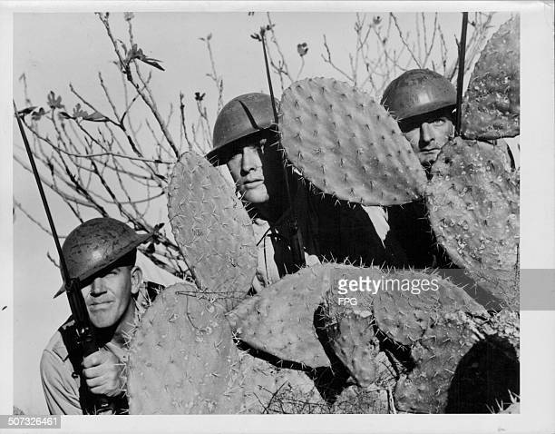 Australian troops taking shelter behind a cactus during training in World War Two Australia circa 1943