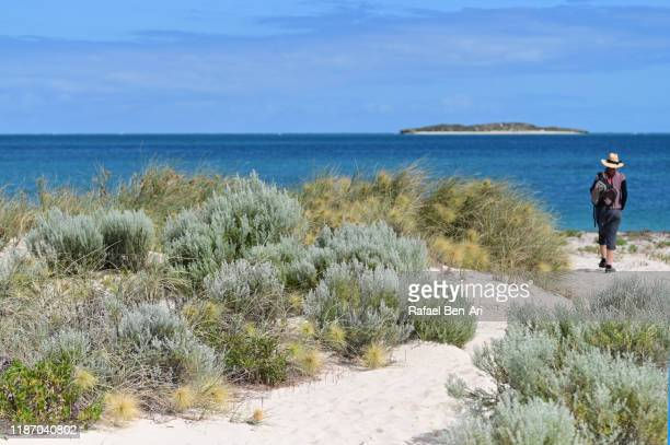 australian woman hiking on a sand dune with coastal vegetation against the indian ocean - rafael ben ari stock pictures, royalty-free photos & images