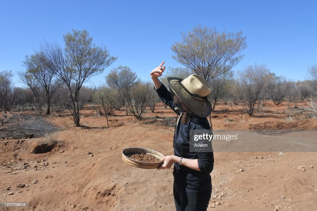 Australian woman searching gem stones in Australia outback. : News Photo