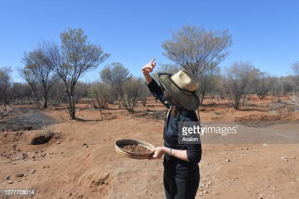 Australian woman searching gem stones in Australia outback.