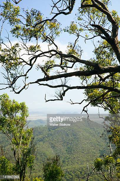 AUSTRALIA-Queensland-CAPRICORN COAST-Rockhampton: Trees / Mt. Archer