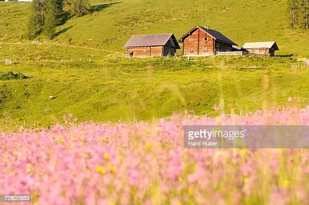 Austria, Alpine Lodge in Meadow