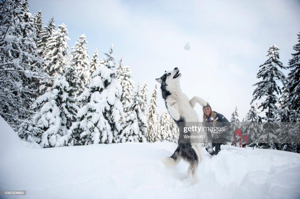 Austria, Altenmarkt-Zauchensee, young woman with dog in winter forest : ストックフォト