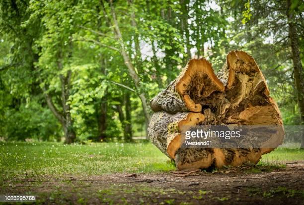 Austria, Burgenland, Bad Taztmannsdorf, hollow tree trunk, tree log