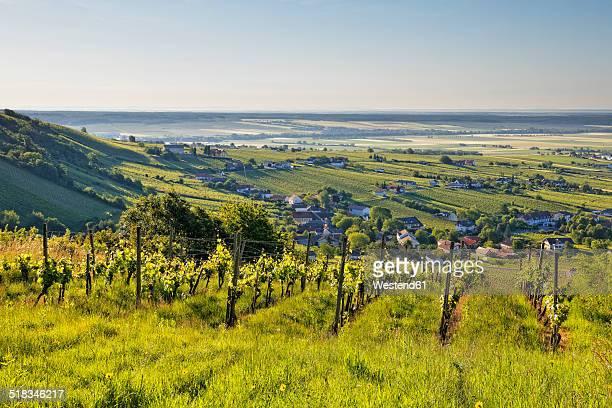 Austria, Burgenland, Oberwart District, Eisenberg an der Pinka, Vineyard