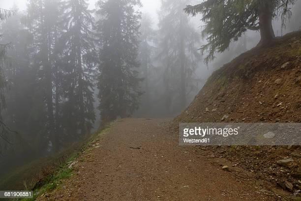 Austria, Carinthia, Emberger Alm, trail in fog