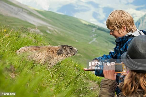 Austria, Carinthia, Kaiser-Franz-Josefs-Hoehe, girl photographing and boy feeding alpine marmot (marmota marmota)