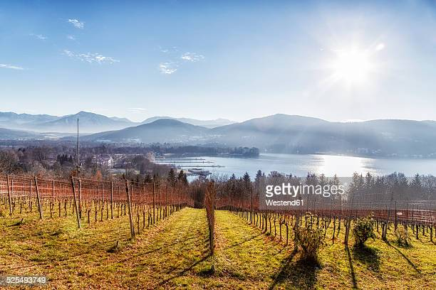 austria, carinthia, klagenfurt, vineyard at woerthersee - carinthia stock pictures, royalty-free photos & images