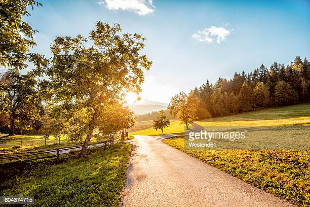 Austria, Carinthia, Ludmannsdorf, country road, forest in autumn, against the sun