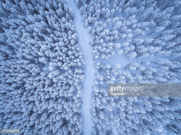 Austria, Gosau, aerial view of road through coniferous forest in winter