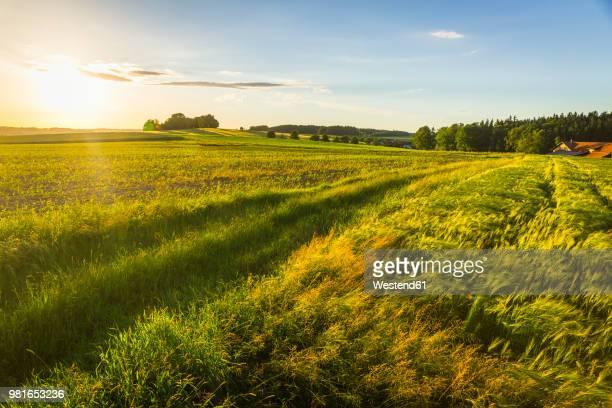 austria, innviertel, field - ländliches motiv stock-fotos und bilder