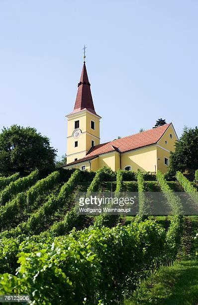 austria, kapfenstein, steiermark, vineyard - austria stock pictures, royalty-free photos & images