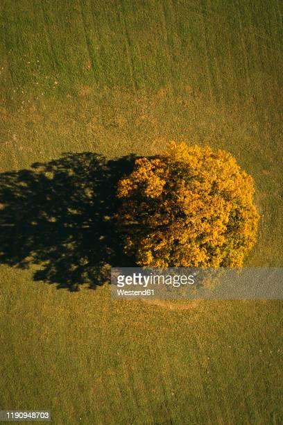 austria, lower austria, aerial view of colorful autumn grove in field - 休耕田 ストックフォトと画像