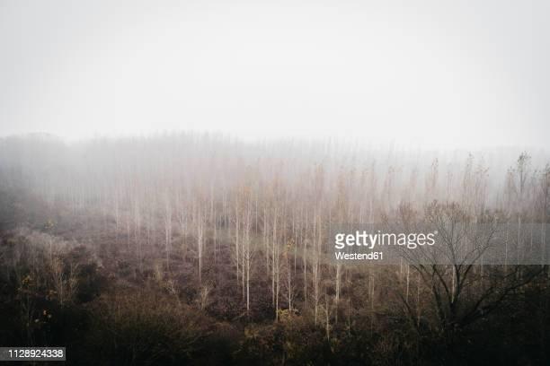 Austria, Lower Austria, autumnal landscape at fog, aerial view