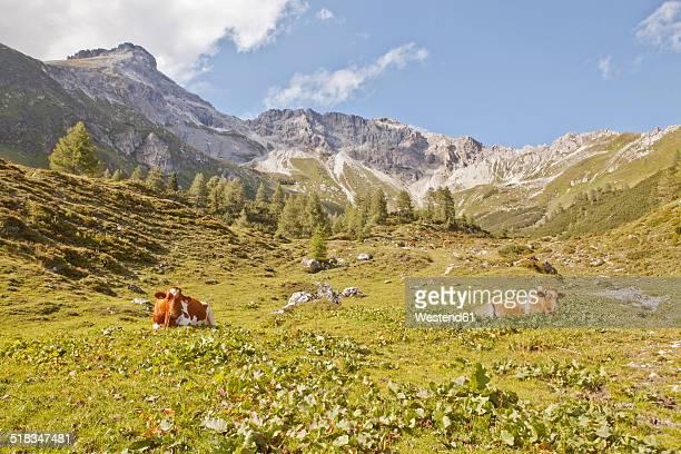 Austria, Lungau, cows in alpine landscape