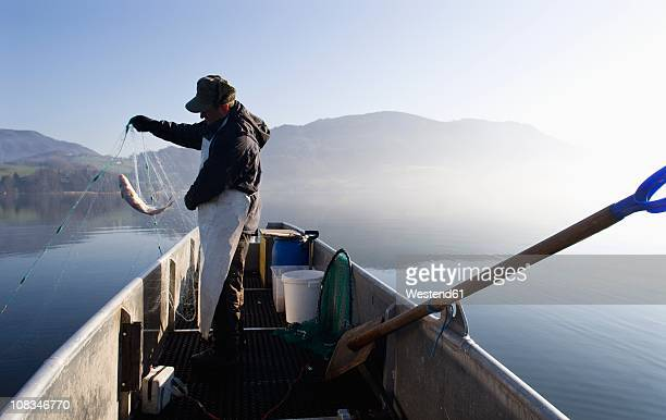 austria, mondsee, fisherman caught a fish in fishing net - upper austria stock pictures, royalty-free photos & images
