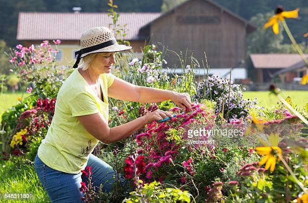 Austria, Mondsee, woman pruning plants in her garden